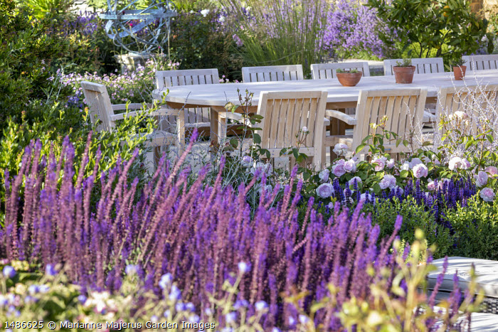 Wooden table and chairs on stone patio, Rosa 'Olivia Rose Austin', Perovskia 'Blue Spire', Salvia nemorosa 'Caradonna'