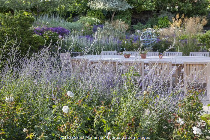 Wooden table and chairs on stone patio, Rosa 'Susan Williams-Ellis', Perovskia 'Blue Spire', Stipa gigantea, armillary sphere