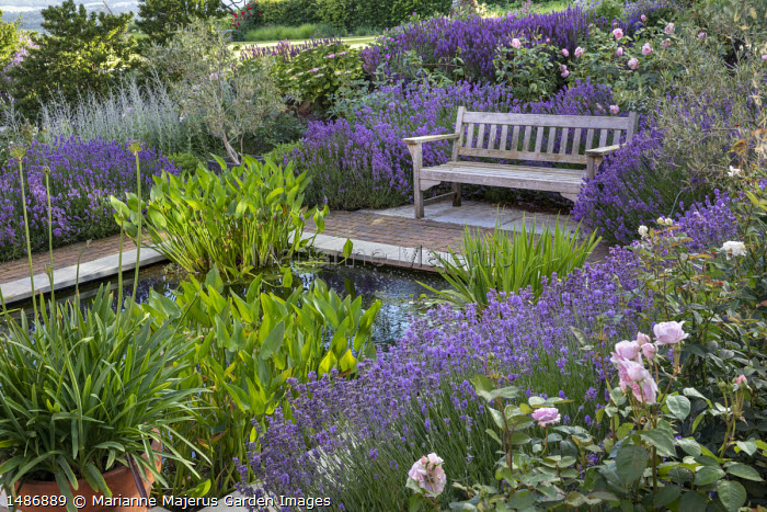 Wooden bench on stone and brick patio overlooking square formal pond, agapanthus in terracotta pots, Lavandula angustifolia 'Munstead', Rosa 'Olivia Rose Austin' and 'The Alnwick Rose'