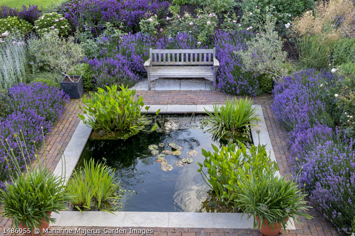 Wooden bench on stone and brick patio overlooking square formal pond, agapanthus and olive trees in pots, Rosa 'The Alnwick Rose', Lavandula angustifolia 'Munstead'
