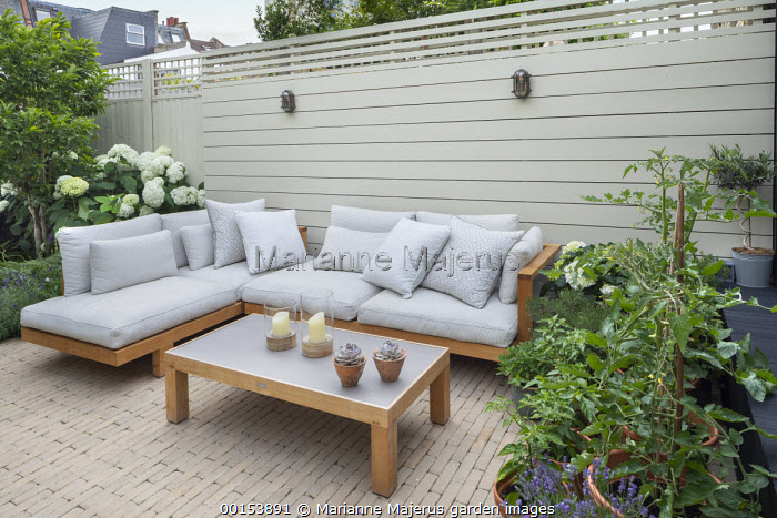 Timber sofas in urban courtyard garden, tomatoes and chillies in pots, painted fence, Hydrangea arborescens 'Annabelle'