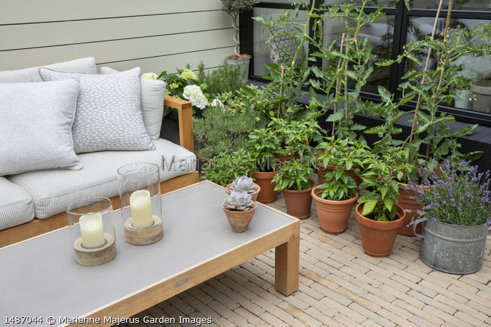 Timber sofas in urban courtyard garden, lavender, tomatoes and chillies in pots, painted fence