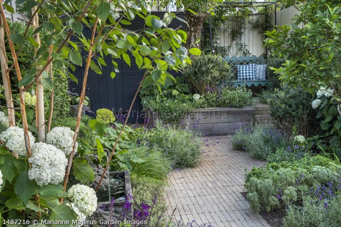 Brick path through courtyard garden, betula, Hydrangea arborescens 'Annabelle'