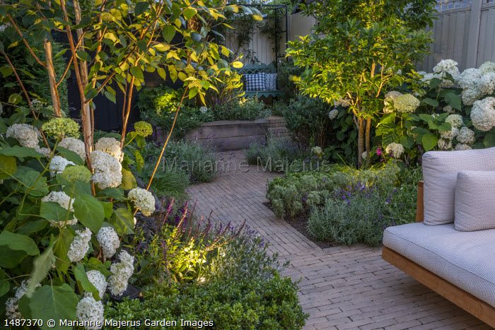 Wooden furniture with cushions on brick patio in courtyard garden, betula, Hydrangea arborescens 'Annabelle', lavender