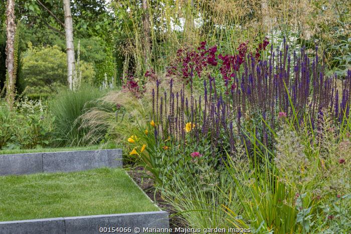 Salvia nemorosa 'Caradonna', penstemon, Stipa tenuissima, Stipa gigantea, stone-edged grass steps