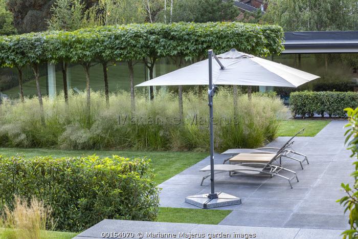 Contemporary recliner chairs under umbrella on concrete patio, umbrella-trained Liquidambar styraciflua, Prunus lusitanica hedge