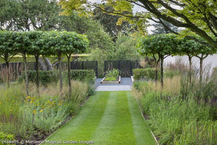 Grass path leading to kitchen garden, umbrella-trained Liquidambar styraciflua underplanted with Deschampsia cespitosa 'Goldtau', black painted trellis