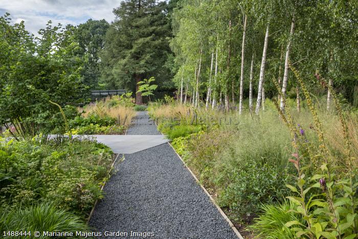Gravel path, concrete paving, border on woodland edge, foxglove seedheads, Betula pendula