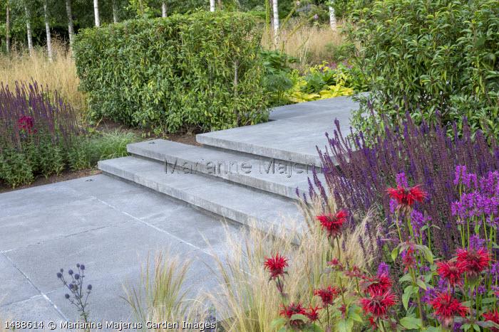 Concrete path and steps, Stipa tenuissima, Betonica officinalis 'Hummelo' syn. stachys, Monarda 'Mahogany', Salvia nemorosa 'Caradonna', Prunus lusitanica hedges