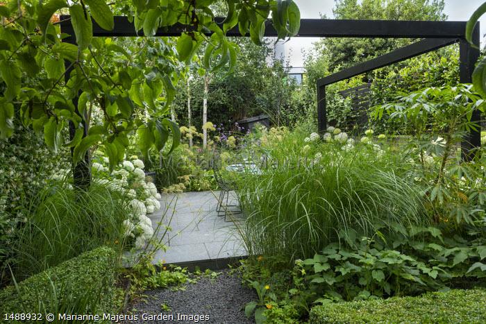 Black painted pergola, Hydrangea arborescens 'Annabelle', stone paving, Miscanthus sinensis 'Sarabande', Schefflera taiwaniana