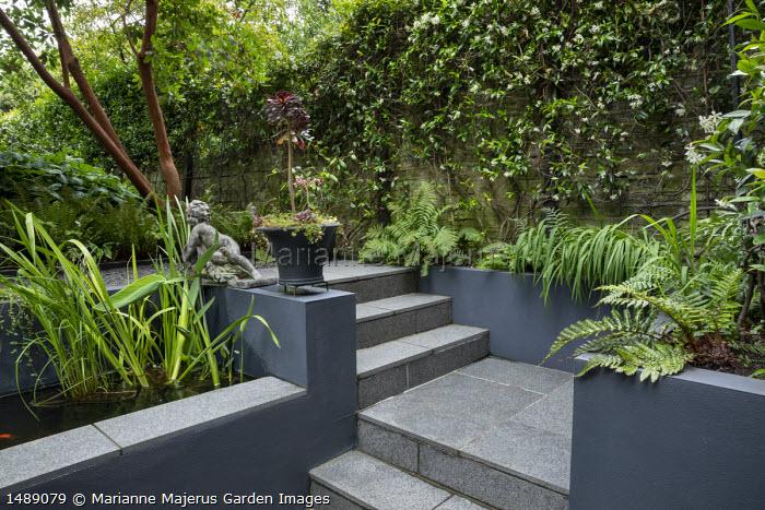 Stone steps, grey painted walls, Trachelospermum jasminoides climbing on brick wall, aeonium in pot, raised pond