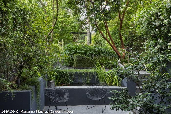 Raised fish pond, metal wirework chairs on stone patio, Arbutus unedo, Persicaria amplexicaulis 'Taurus', Trachelospermum jasminoides