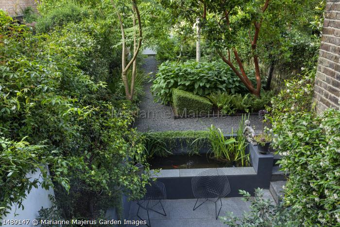Raised fish pond, metal wirework chairs on stone patio, Arbutus unedo, Persicaria amplexicaulis 'Taurus', Polystichum aculeatum, Trachelospermum jasminoides