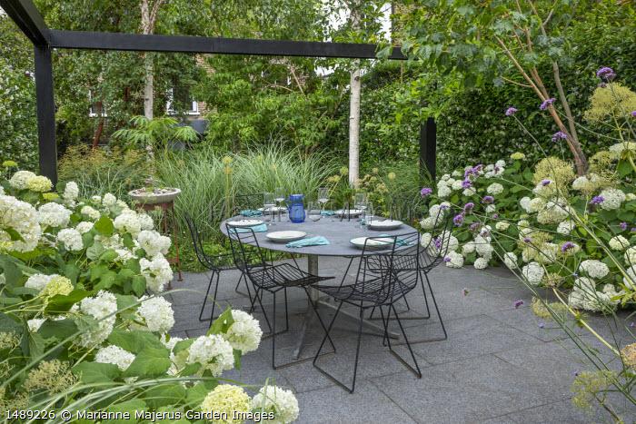 Black painted pergola, Hydrangea arborescens 'Annabelle', table and chairs on stone paving, Verbena bonariensis, Miscanthus sinensis 'Sarabande'