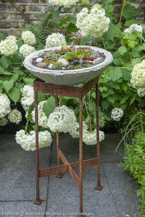 Stone pot on metal pedestal, Hydrangea arborescens 'Annabelle'