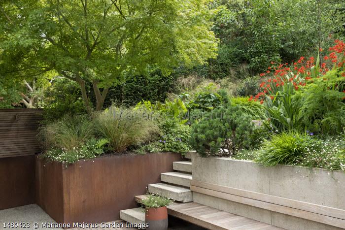 Poured concrete steps leading up terraced sloping garden, built-in wooden bench, Pinus mugo var. mugo, Erigeron karvinskianus, Hakonechloa macra, Anemanthele lessoniana, Selinum wallichianum, Crocosmia 'Lucifer'