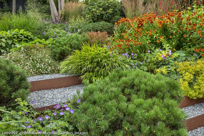 Geranium 'Rozanne', Cor-Ten steel edged steps, Helenium 'Waldtraut', Alchemilla mollis, Pinus mugo var. mugo, Persicaria amplexicaulis 'Firetail', Salvia nemorosa 'Caradonna', Hakonechloa macra, Erigeron karvinskianus
