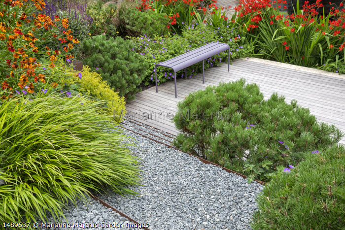 Helenium 'Waldtraut', Crocosmia 'Lucifer', Hakonechloa macra, Pinus mugo var. mugo, purple metal bench on decking, Geranium 'Rozanne', Alchemilla mollis