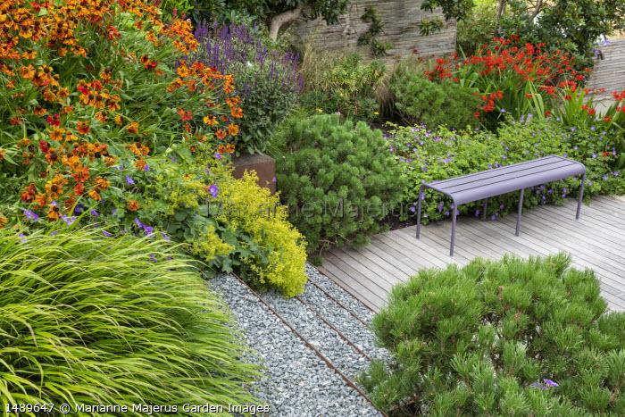 Helenium 'Waldtraut', Crocosmia 'Lucifer', Hakonechloa macra, Pinus mugo var. mugo, purple metal bench on decking, Geranium 'Rozanne', Alchemilla mollis, Salvia nemorosa 'Caradonna'