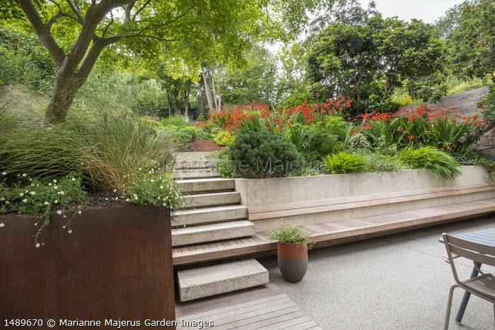 Poured concrete steps leading up terraced sloping garden, built-in wooden bench, Pinus mugo var. mugo, Erigeron karvinskianus, Hakonechloa macra, Anemanthele lessoniana, Crocosmia 'Lucifer'