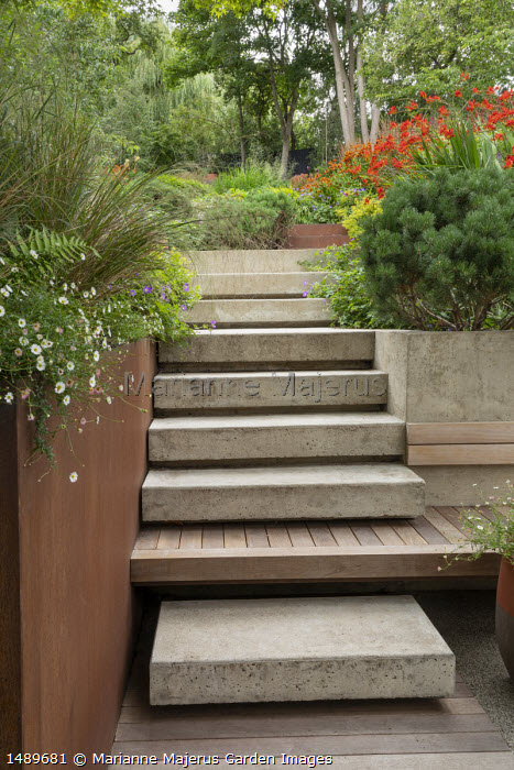 Poured concrete steps leading up terraced sloping garden, Pinus mugo var. mugo, Erigeron karvinskianus, Crocosmia 'Lucifer'