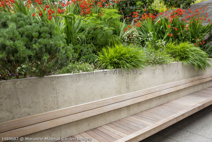 Built-in cantilevered wooden bench, Pinus mugo var. mugo, Erigeron karvinskianus, Hakonechloa macra, Selinum wallichianum, Crocosmia 'Lucifer', Astrantia major 'Shaggy'