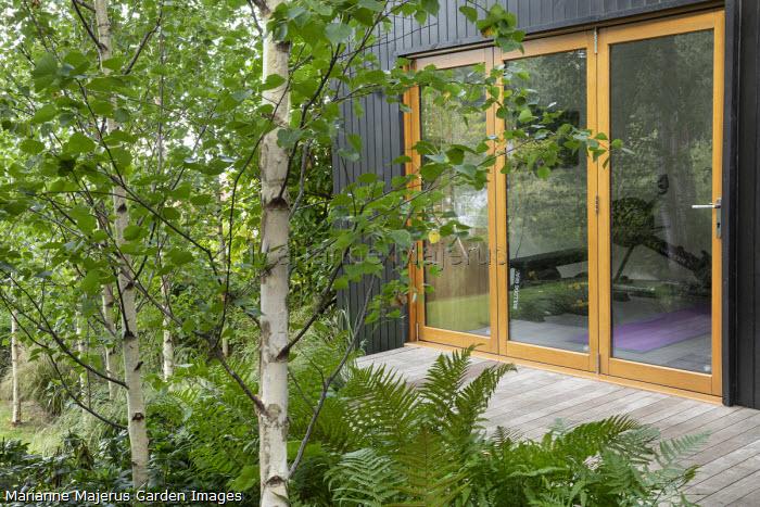 Garden pavilion studio, Betula pendula subsp. pendula 'Zwitsers Glorie'