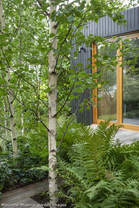 Garden pavilion studio, Betula pendula subsp. pendula 'Zwitsers Glorie', Euphorbia amygdaloides var. robbiae