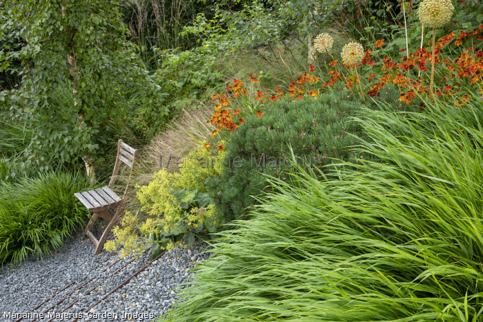 Sloping garden, Helenium 'Waldtraut', Hakonechloa macra, Allium hollandicum 'Purple Sensation' seedheads, wooden chair, Alchemilla mollis, Pinus mugo var. mugo