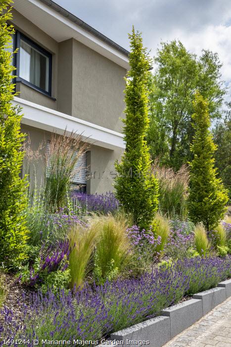 Raised bed edged with lavender, Stipa tenuissima, Verbena bonariensis 'Lollipop'