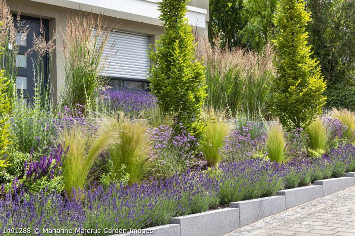 Raised bed edged with lavender, Stipa tenuissima, Verbena bonariensis 'Lollipop', Perovskia 'Blue Spire'
