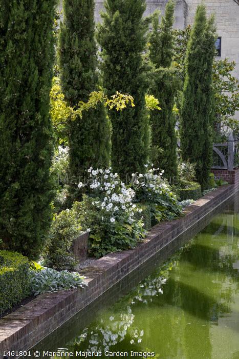 Row of Cupressus sempervirens by formal pond, Anemone × hybrida 'Honorine Jobert'