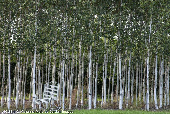 White metal rocking chair by birch woodland
