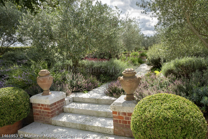Stone steps flanked with terracotta urns on plinths, avenue of olive trees underplanted with lavender