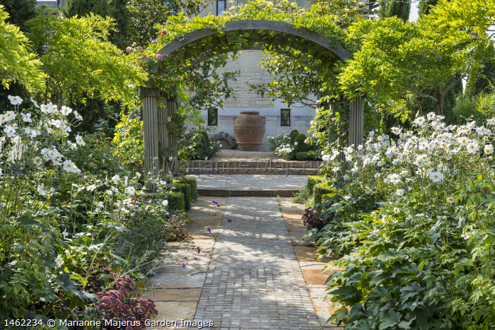 Stone path under pergola archway covered with wisteria, Anemone x hybrida 'Honorine Jobert', large terracotta urn