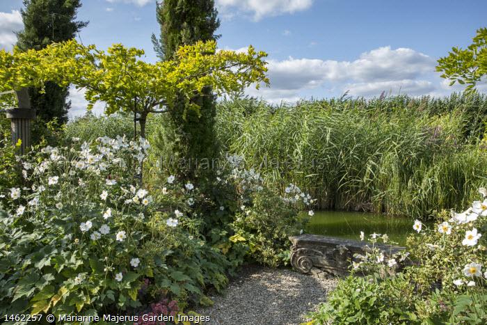 Standard trained wisteria, Cupressus sempervirens, Anemone x hybrida 'Honorine Jobert', classical stone bench by pond