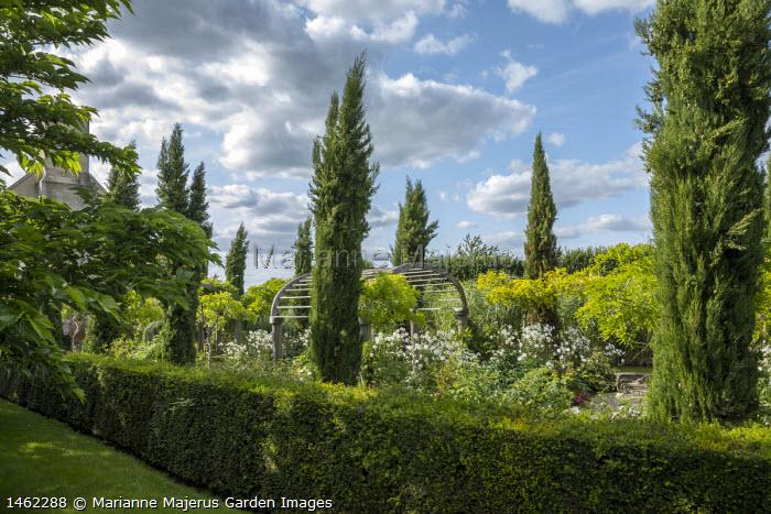 Avenue of Cupressus sempervirens, clipped yew hedge, Anemone x hybrida 'Honorine Jobert'
