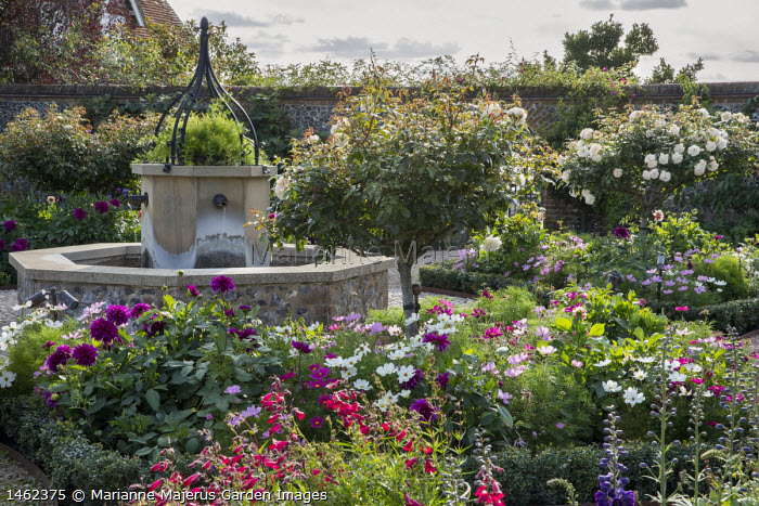 Water fountain in walled garden, Cosmos bipinnatus, penstemon and dahlias in box-edged borders, standard trained roses lollipops