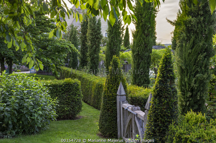 Row of Cupressus sempervirens, clipped Taxus baccata pyramids and hedge
