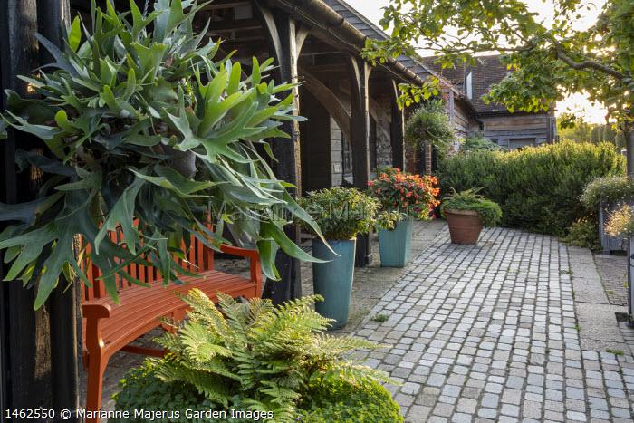 Platycerium bifurcatum in hanging basket, orange painted bench, stone sett patio