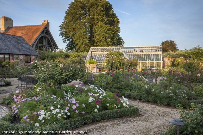 Rose garden, Cosmos bipinnatus in box-edged borders, greenhouse, gravel path edged with Cor-Ten steel