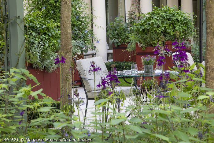 Table and chairs on patio, Lobelia × speciosa 'Hadspen Purple', large red painted containers