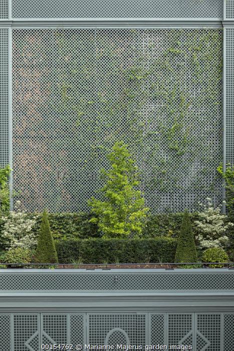 Green painted trellis screen, Taxus baccata pyramids and clipped yew and beech hedges, Magnolia x loebneri 'Merrill', Cornus controversa 'Variegata'
