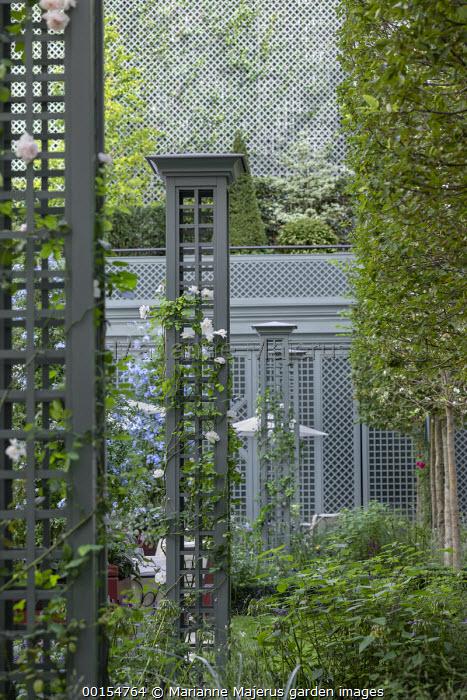 Rosa 'New Dawn' climbing on green painted pillars, trellis screen