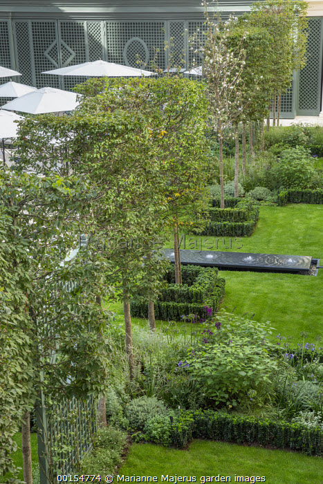 Row of pleached Carpinus betulus trees, trellis screens, Euonymus japonicus 'Microphyllus' edging