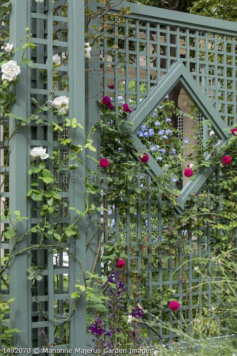Rosa 'Tess of the d'Urbervilles' climbing on green painted trellis screen, Rosa 'New Dawn' climbing on pillar