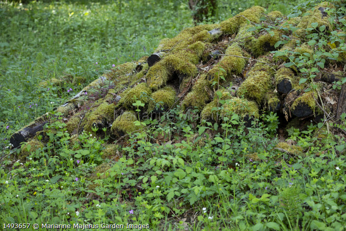 Moss-covered logs in woodland