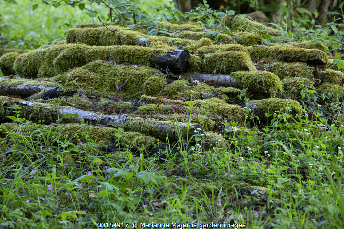 Pile of mossy logs in woodland