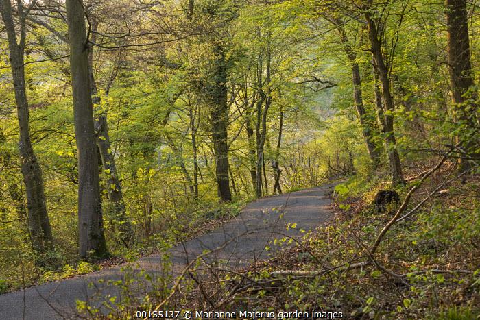 Track leading through woodland, dappled shade