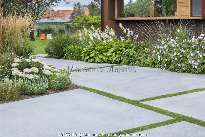 White garden, Anemone x hybrida 'Honorine Jobert', hosta, polished concrete paving